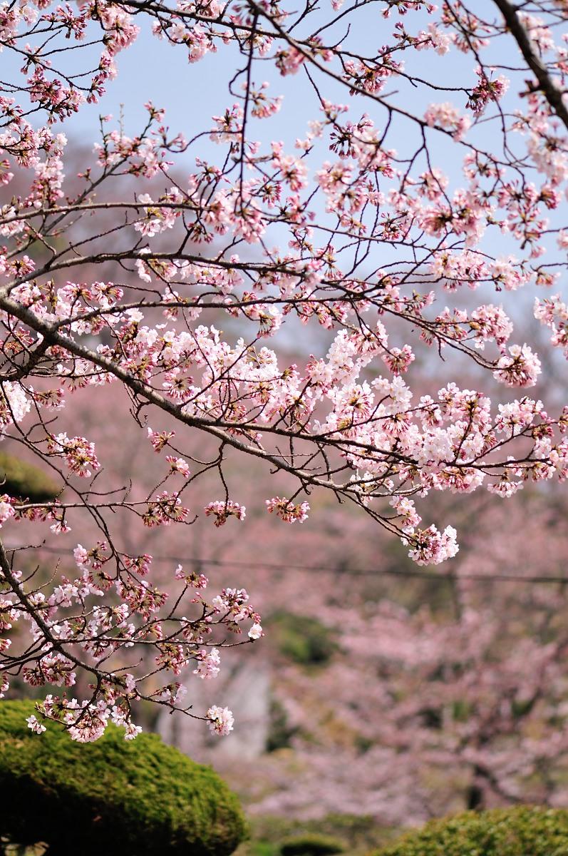 種松山公園_f0224648_16125718.jpg