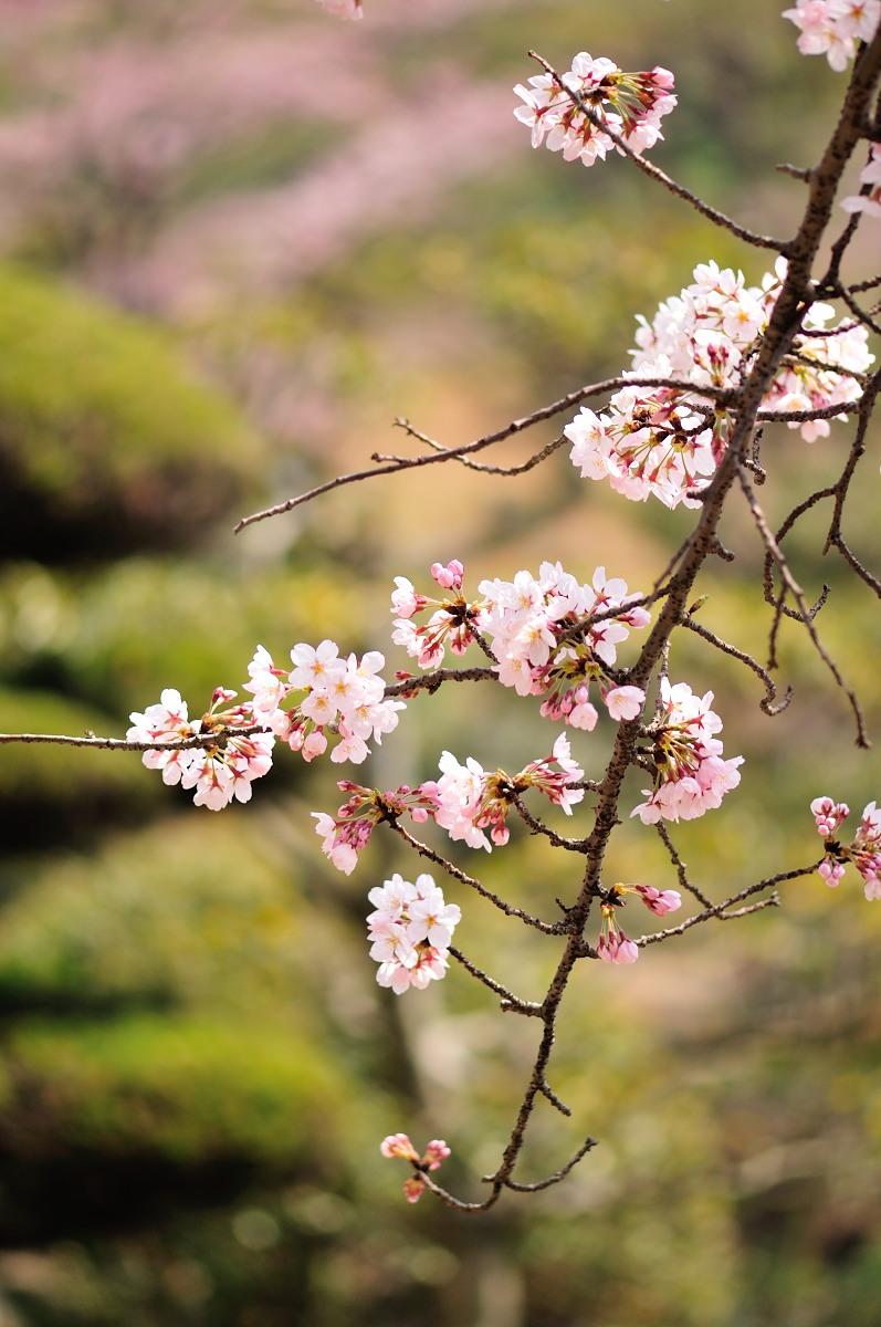 種松山公園_f0224648_16131445.jpg