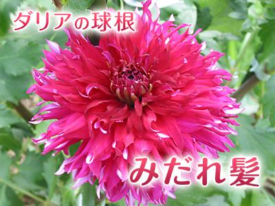 a0254656_171616.jpg