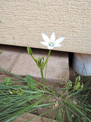 春の香り_a0108859_10475592.jpg