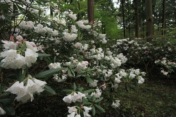 雨に似合う花は?_e0304170_16301588.jpg