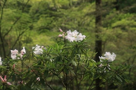 雨に似合う花は?_e0304170_16304863.jpg