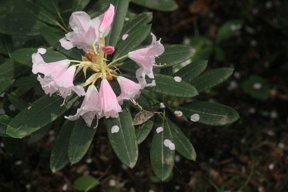 雨に似合う花は?_e0304170_16305807.jpg