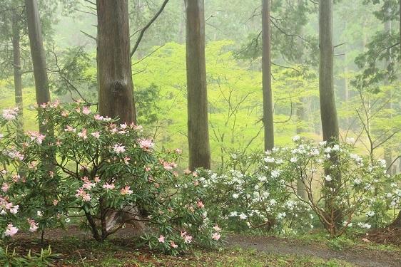 雨に似合う花は?_e0304170_16310701.jpg
