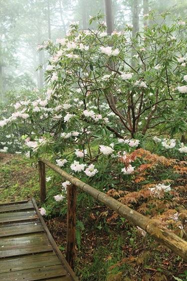 雨に似合う花は?_e0304170_16313423.jpg