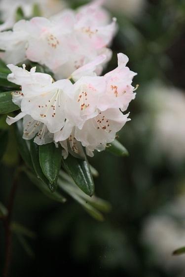 雨に似合う花は?_e0304170_16314399.jpg