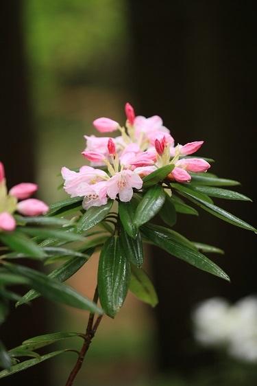雨に似合う花は?_e0304170_16321047.jpg