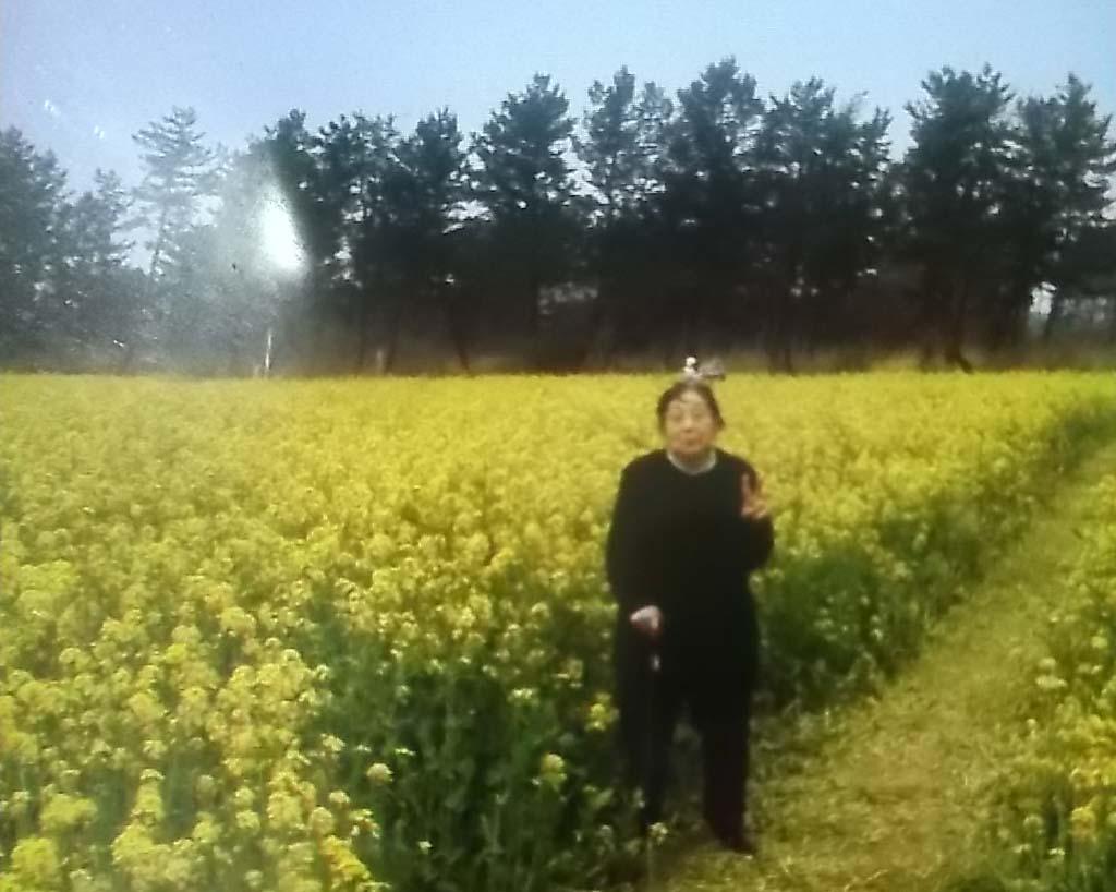 夫と義母が花見に_f0019498_15432994.jpg