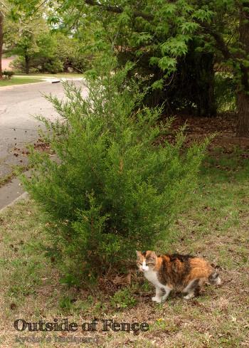 裏庭の外に出た猫の反応_b0253205_02325098.jpg