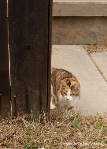裏庭の外に出た猫の反応_b0253205_02334340.jpg