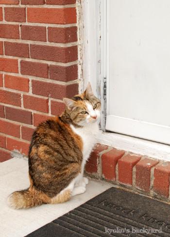 裏庭の外に出た猫の反応_b0253205_02342645.jpg