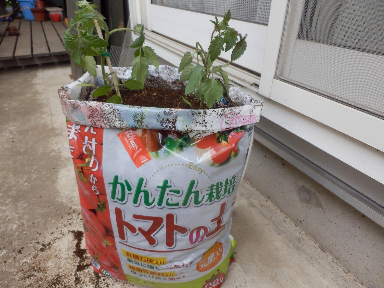 我が家の家庭菜園_d0013610_13452041.jpg