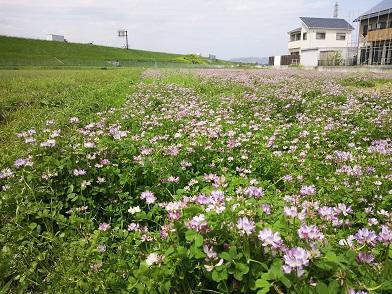 春の現場_e0149215_22405316.jpg