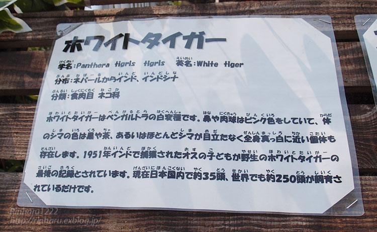 f0250322_19261892.jpg