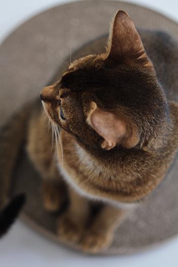 [猫的]コーヒーと水_e0090124_23405097.jpg