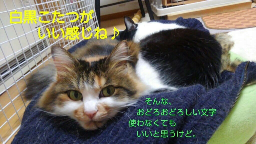c0181639_20130544.jpg