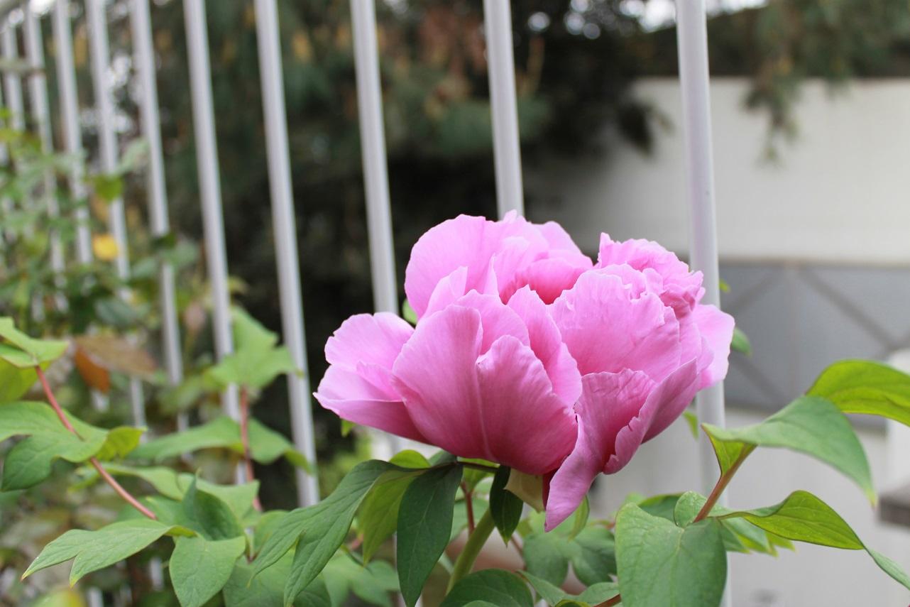 蘭香茶館の春色_f0070743_163026100.jpg