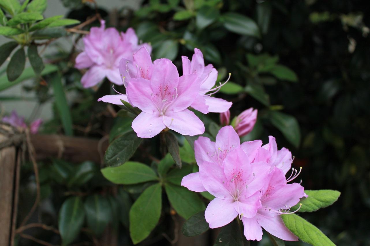 蘭香茶館の春色_f0070743_16322071.jpg