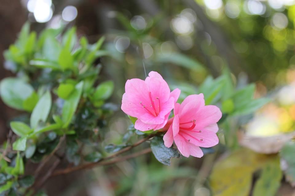 蘭香茶館の春色_f0070743_16332741.jpg