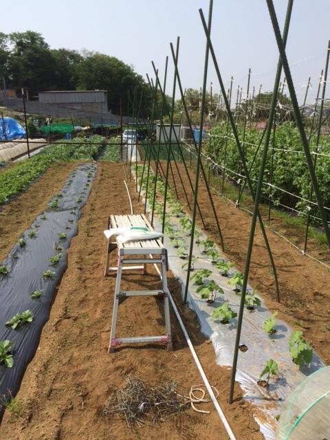 鶉豆の櫓立て作り始めます _c0222448_14444843.jpg