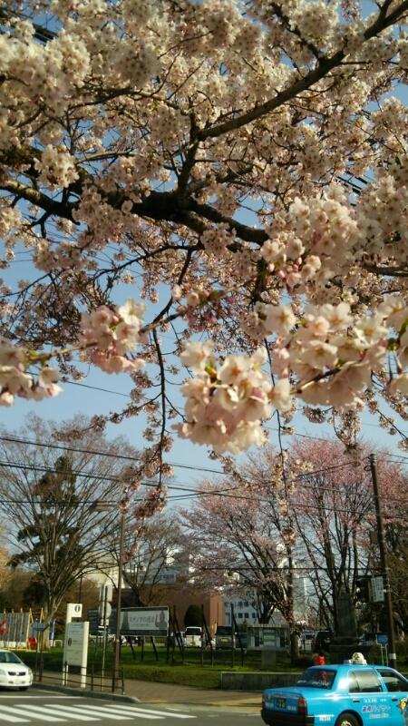 平成27年4月25日(土)今朝の函館の気温と天気は_b0106766_884951.jpg