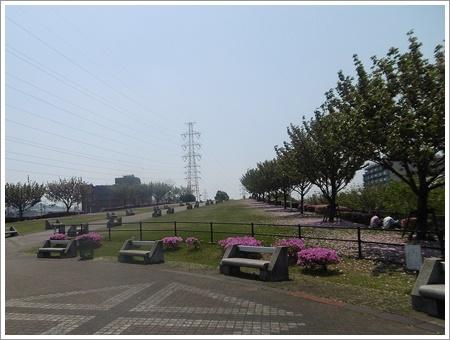 今日は公園でお散歩、八重桜の花びらの絨毯、きれいだったね~_b0175688_21450204.jpg