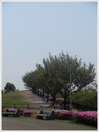 今日は公園でお散歩、八重桜の花びらの絨毯、きれいだったね~_b0175688_21450555.jpg
