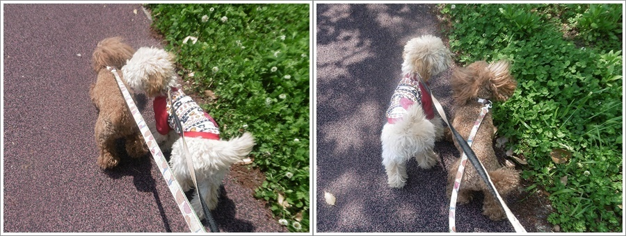 今日は公園でお散歩、八重桜の花びらの絨毯、きれいだったね~_b0175688_21531294.jpg