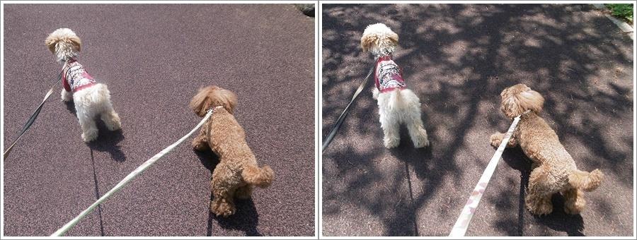 今日は公園でお散歩、八重桜の花びらの絨毯、きれいだったね~_b0175688_21531458.jpg