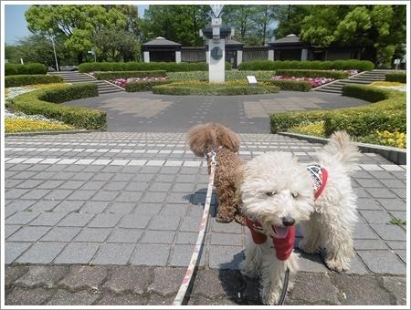 今日は公園でお散歩、八重桜の花びらの絨毯、きれいだったね~_b0175688_21580844.jpg