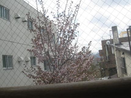 桜の便りとお茶会・お誕生日会_b0159098_948548.jpg