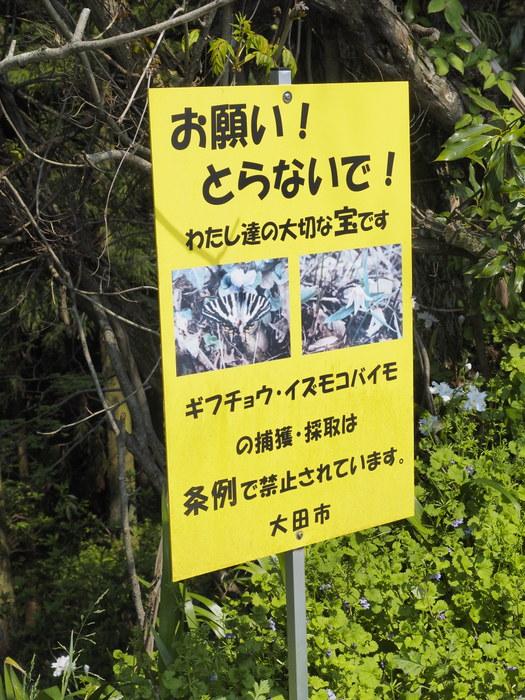 大江高山登山_c0116915_23504013.jpg