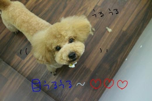 誕生日!!_b0130018_00405475.jpg