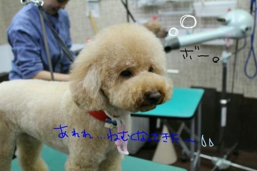 誕生日!!_b0130018_00465932.jpg