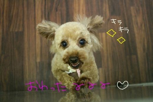 誕生日!!_b0130018_01025387.jpg
