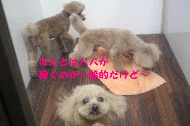 b0130018_8265138.jpg