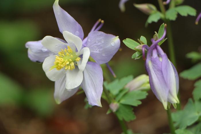 春本番 庭の花々_d0150720_17465891.jpg