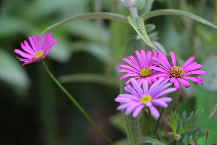 春本番 庭の花々_d0150720_17471589.jpg
