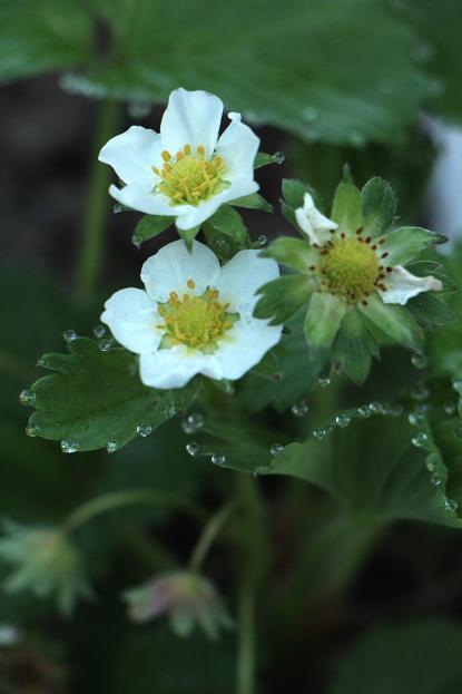 春本番 庭の花々_d0150720_17483285.jpg