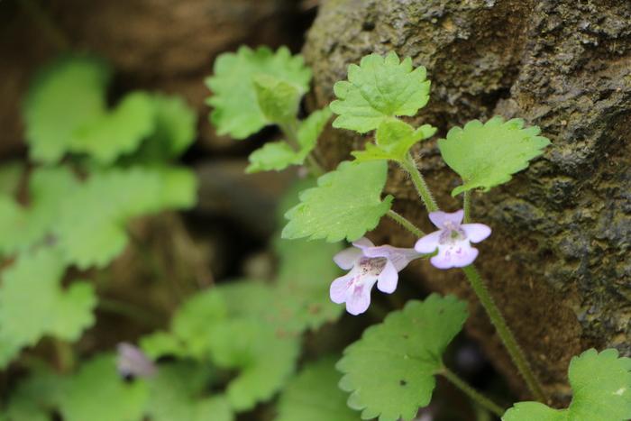春本番 庭の花々_d0150720_17484656.jpg