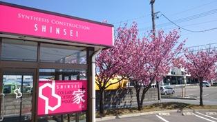会社の桜が満開です。_e0180332_1351579.jpg