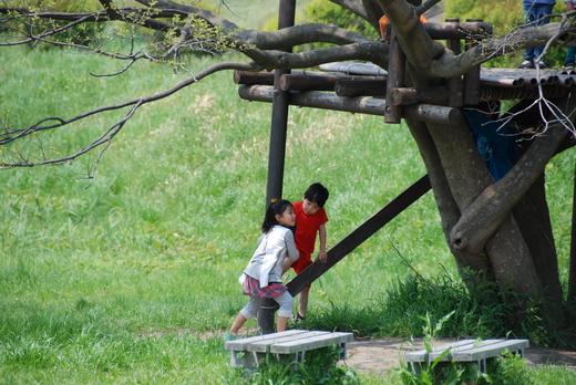 4月25日のきぬたまあそび村 野草の天ぷら_c0120851_024529.jpg