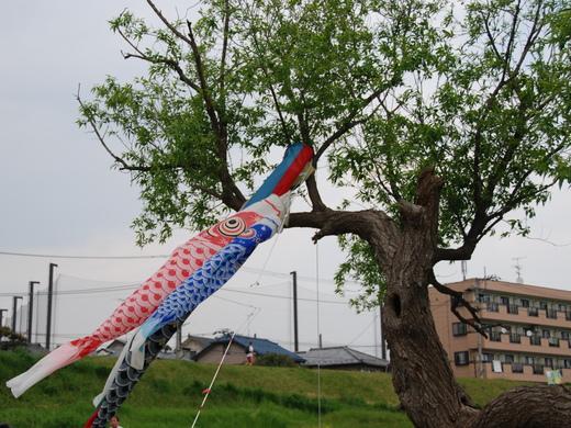 4月25日のきぬたまあそび村 野草の天ぷら_c0120851_053538.jpg
