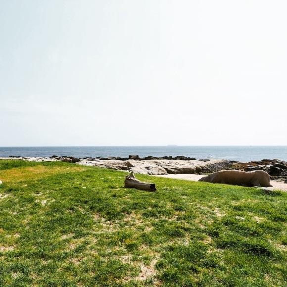 ◆房総望遠鏡行脚 その② 〜白浜フラワーパーク_b0008655_15313860.jpg