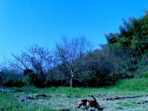 今年の田んぼの仕事始めです。_c0238355_21311098.jpg