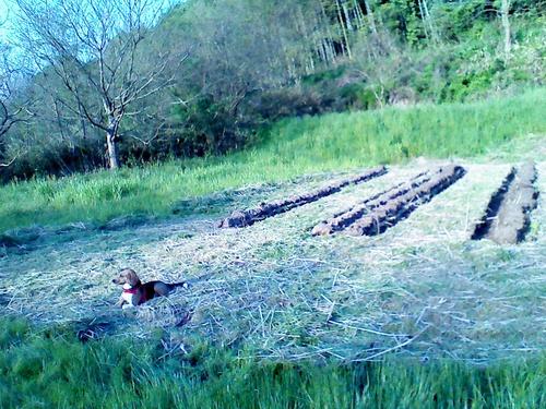 今年の田んぼの仕事始めです。_c0238355_21334630.jpg