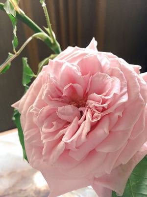 薔薇のアーチは⁉︎_e0086864_2313784.jpg