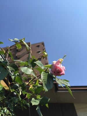 薔薇のアーチは⁉︎_e0086864_23138100.jpg