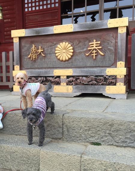 武蔵御嶽神社で健康長寿を祈願_a0109467_2218585.jpg
