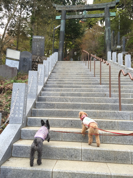 武蔵御嶽神社で健康長寿を祈願_a0109467_2274918.jpg